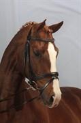 Hest til salg - SØBÆKGÅRDS BOWIE