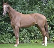 Hest til salg - Isébufa