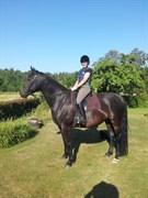 Hest til salg - KENYA KI-MAR