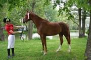 Hest til salg - LA BRINKA