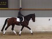 Hest til salg - HOUMARKENS ZEUS