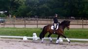 Hest til salg - ROMANXIE
