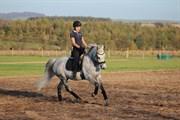 Hest til salg - Casiopaja