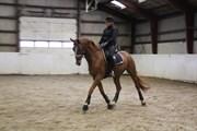 Hest til salg - Lagos