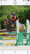 Hest til salg - Golden Star