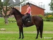 Hest til salg - NICKOLINE