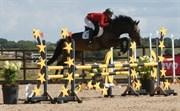 Hest til salg - PRIOR'S CALVADO