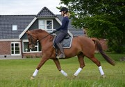 Hest til salg - NØRLUNDS SAMANTHA