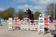 Hest til salg - SIR JORIS Z