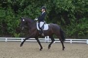 Hest til salg - BRUUNHOLMS CARIBIAN