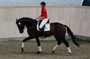 Hest til salg - LANGESKOVS RUSH GIRL