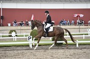 Hest til salg - SASSY SILKE