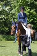 Hest til salg - A-TACK (SWE)