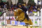 Hest til salg - NORDAN'S AURORA