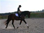 Hest til salg - MISS PAVINA