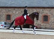 Hest til salg - HEDELUNDS HIGH ATTENTION