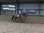 Hest til salg - WESTSIDE'S LE COUER