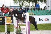Hest til salg - Woodfield Rising Star