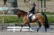 Hest til salg - SOLVANGGÅRDS CASPER