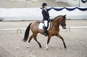 Hest til salg - AVELON