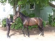 Hest til salg - Emmelie H