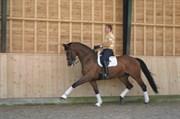 Hest til salg - Bakkely´s Milon