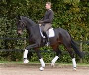 Hest til salg - JASON