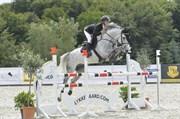 Hest til salg - CADEAU