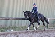 Hest til salg - BENNETON HS0
