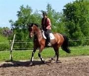 Hest til salg - COCO SAN