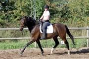 Hest til salg - FUGLSANGS SUNLIGHT