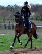 Hest til salg - ENJOY