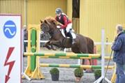 Hest til salg - CHANELL