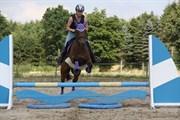 Hest til salg - ROMEO´S ISA