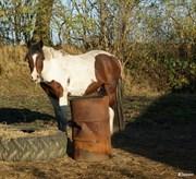 Hest til salg - BRUNSGAARDS MESSIE