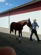 Hest til salg - KEEP FLYING