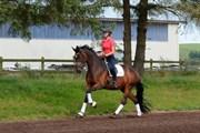 Hest til salg - No Name