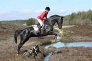 Hest til salg - RUNEHØJS MOONSHINE