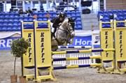 Hest til salg - LANCELOT