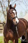 Hest til salg - HØJGAARDENS LA AMOUR