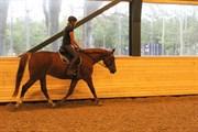 Hest til salg - RISAGERGAARDS FALLULAH