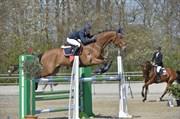 Hest til salg - Storbank´s Ochtinus