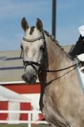 Hest til salg - SL Mini