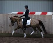 Hest til salg - KALBYGÅRD'S MALOU