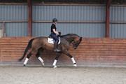 Hest til salg - LESCOT