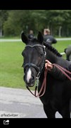 Hest til salg - NYDAM'S MARIE