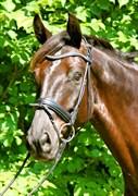 Hest til salg - SØENSMINDES SEATTLE