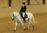 Hest til salg - Oxygen