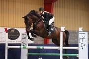 Hest til salg - BURGILLON