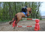 Hest til salg - Annexgaardens Chacon